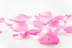 rose płatków Obrazy Royalty Free