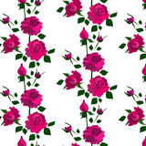 Rose pattern. Including seamless sample in swatch panel (Illustrator Royalty Free Stock Image