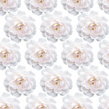 Rose Pattern blanche Belle fleur dans le jardin Backgroun floral Images stock
