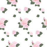 Rose pattern Royalty Free Stock Photography