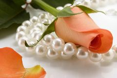 Rose and pearl. White pearl necklace and rose over white background Stock Image