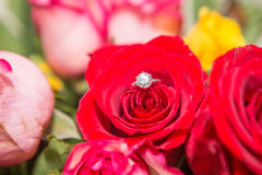 Rose, pearl and diamond ring Stock Images