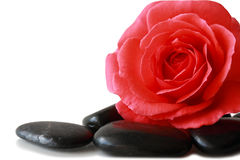 Rose and Pebble Stock Photography