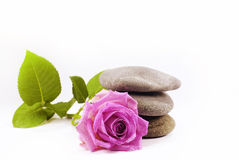 Rose and pebble Stock Images