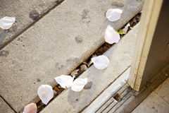 Rose Pedals On The Ground rose Photos stock