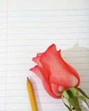 Rose and pencil on paper Stock Images