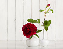 Rose and Peony still life Stock Photography