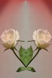 Rose per il cuore Immagini Stock Libere da Diritti
