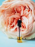Rose perfumed oil. Arab perfume in mini bottles. Bottle of oil agarwood tree. Rose perfumed oil stock images