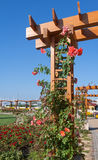 Rose Pergola Images stock