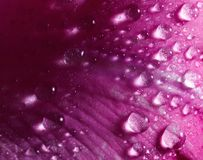 Rose petal. Closeup of rose petal with water drops royalty free stock photo