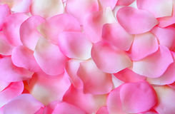 Rose Petal Background. Pink and white rose petals arranged as a background Stock Images