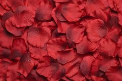 Rose petal background. Background made of red rose petal Royalty Free Stock Photography