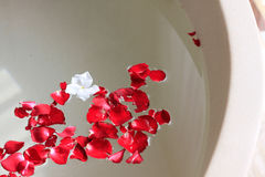 Rose petal in bath Stock Photos