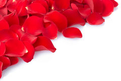 Rose petal border. Red rose petals border isolated on white Stock Image
