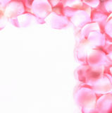 Rose Petal Border 2. Pink and white rose petals arranged in a border over a white background Royalty Free Stock Images