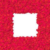 Rose petal - border Stock Photo