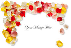 Rose Petal Card Stock Image