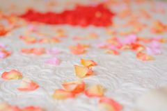 Rose Petal Royalty Free Stock Image