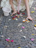 Rose petal colourful wedding Stock Images