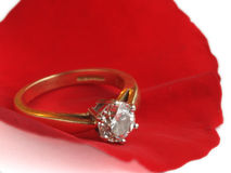 Rose petal and diamond ring Stock Images