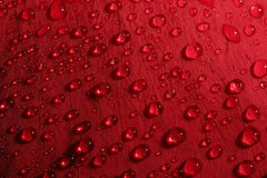 Rose petal droplets Stock Photography