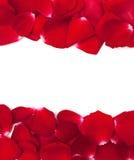 Rose petal frame Royalty Free Stock Image