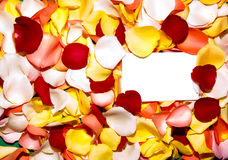Rose petal greeting 2. Blank greeting card in a bed of petals Royalty Free Stock Photography