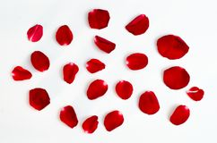 Rose petal isolate on a white background Red design heart stock images