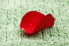 Rose Petal på den gröna handduken royaltyfria foton