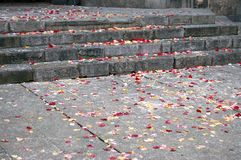 Rose petal and rice. Rose petals and rice on the ground, wedding day stock image