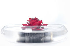 Rose petal spa. Preparing for a treatment at the spa with rose petal royalty free stock photography