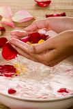 ROSE PETAL SPA. Beautiful female hands and bowl of pure water with rose petals Royalty Free Stock Photos