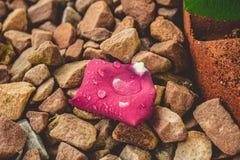 Rose Petal With Water Droplets, die auf Grundgestein stillsteht stockfotografie