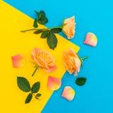Rose, petali e foglie verdi arancio su fondo giallo e blu Disposizione piana, vista superiore Priorità bassa della sorgente Fotografie Stock Libere da Diritti