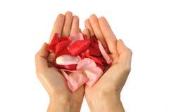 Rose petals 1. An image of rose petals on the palm stock photos