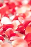 Rose petals Royalty Free Stock Photo