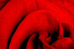 Rose Petals. Red Rose Petals Royalty Free Stock Image