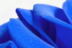 Rose Petals. Blue Rose Petals Royalty Free Stock Photos