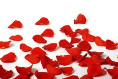 Rose petals. Romantic red rose petals on white with copy space Stock Image