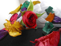 Rose and petals Stock Photography