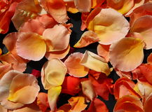 Rose petals. A layer of colorful rose petals stock photos
