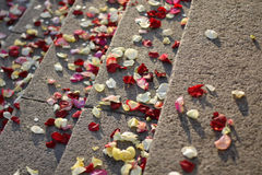 Rose petals. On the staircase royalty free stock image