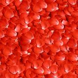 Rose Petals. Seamless Texture Tile from Photographic Original Royalty Free Stock Photo