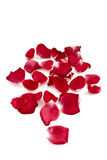 Rose petals Stock Image