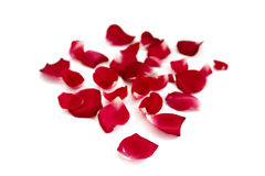 Rose petals Stock Images