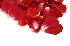 Rose petals. Isolated on white royalty free stock photos