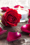 Rose and petals royalty free stock photo