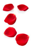 Rose petals. Red rose petals isolated on white, clipping path included royalty free stock photos