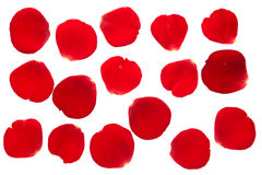 Rose petals. Red rose petals collection isolated on white Royalty Free Stock Image